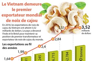 Le Vietnam demeure le premier exportateur mondial de noix de cajou