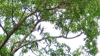 """Découverte des """"oiseaux-serpents"""" dans la province de Dong Nai"""
