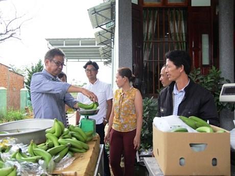 Lam Dong exporte des bananes Laba vers le Japon
