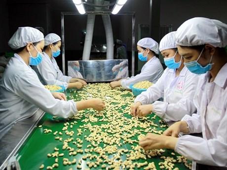 2018: le Vietnam reste le plus grand exportateur mondial de noix de cajou
