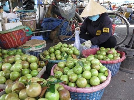 Aménagement de plantations de pommes de lait Lo Rèn pour l'exportation