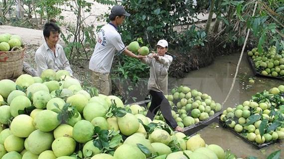 Le Chili autorise l'importation de pamplemousses vietnamiens