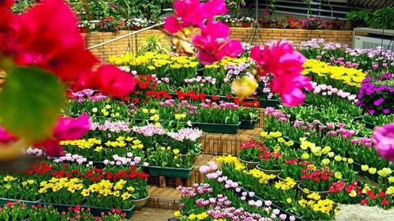 Quang Binh: 122 millions d'euros pour le Festival international des fleurs 2023
