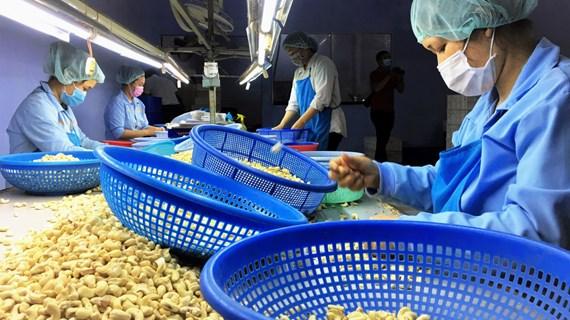 La noix de cajou vietnamienne augmente sa part de marché en Russie