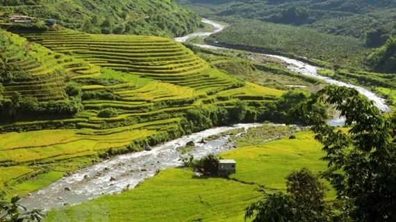 """La beauté de la """"saison dorée"""" dans la zone frontalière de Si Lo Lau à Lai Chau"""