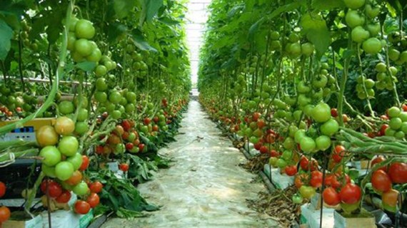 Vietnam-Japon: Accélérer la coopération commerciale dans le secteur agricole