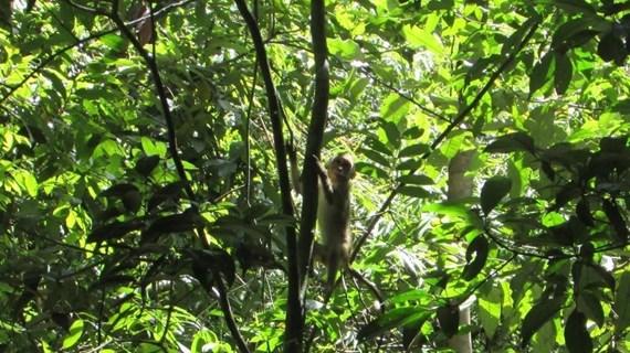 Binh Phuoc: quatre animaux sauvages relâchés dans le Parc national de Bu Gia Map