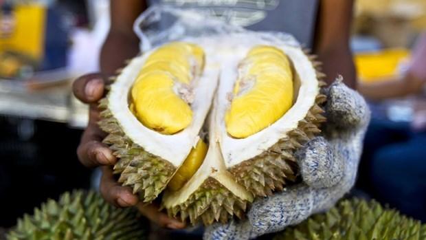 Le durian, produit a l'export potentiel de la Malaisie hinh anh 1