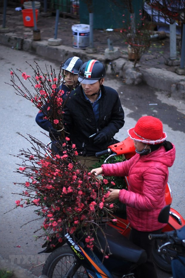 Les fleurs de pecher annoncent l'approche du Tet hinh anh 2
