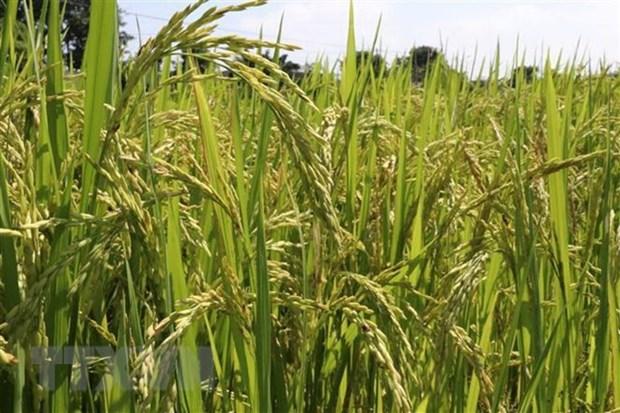 Les opportunites et defis pour les exportations agricoles en 2019 hinh anh 1