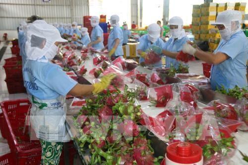 Les exportations de fruits et legumes du Vietnam visent 4,2 milliards de dollars pour 2019 hinh anh 1