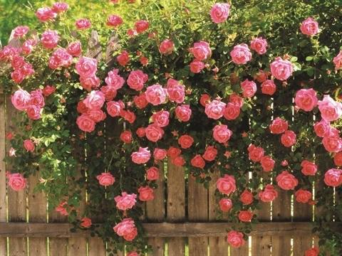 Prolonger la vie des fleurs hinh anh 1