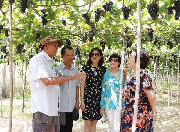 Ninh Thuan : le nombre de touristes multiplie par trois pendant les cinq jours feries hinh anh 1