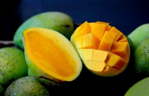 La mangue de Son La est exportee vers des marches exigeants hinh anh 2