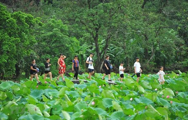 Le Vietnam, l'une des destinations preferees des Japonais hinh anh 1