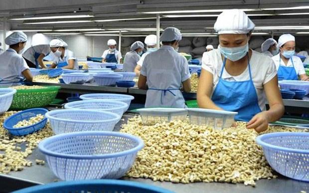 Montee en fleche des exportations nationales de noix de cajou vers la Chine hinh anh 1