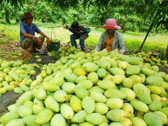 Apres le fruit du dragon, la mangue vietnamienne obtient le feu vert du Chili hinh anh 1