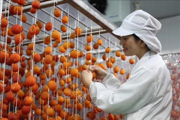 Mise en service d'une usine de production de kakis seches a Lam Dong hinh anh 2
