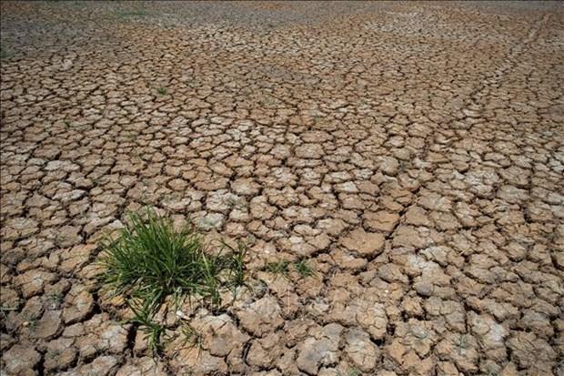 La Thailande renforce les aides aux agriculteurs touches par la secheresse hinh anh 1