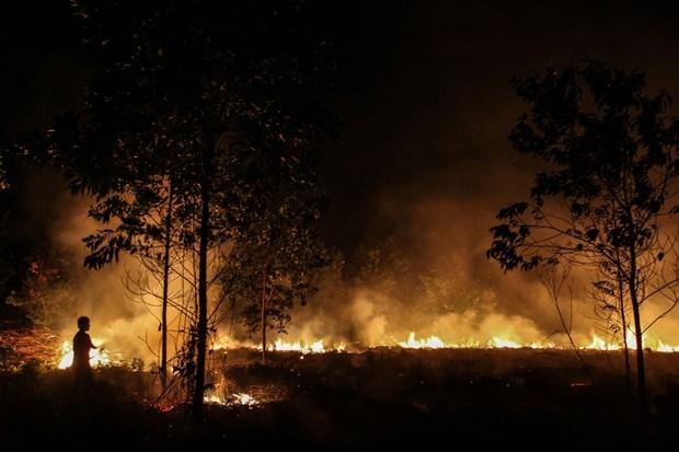 Indonesie : le gouvernement cree des pluies artificielles pour prevenir les incendies de foret hinh anh 1