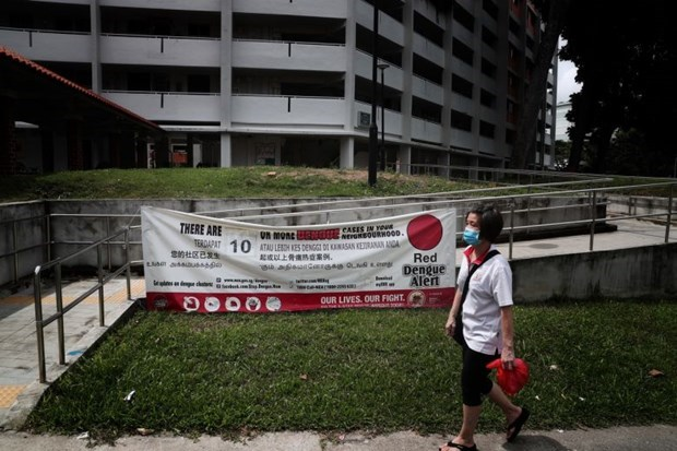 Singapour enregistre un record du nombre de cas de dengue en une semaine hinh anh 1
