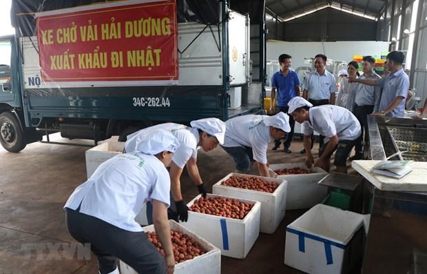 Hai Duong exporte le premier lot de litchi