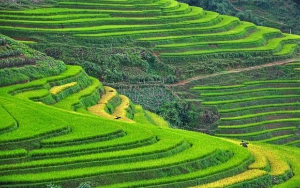Sa Pa et Ninh Binh dans le top des destinations les plus attrayantes en Asie hinh anh 1