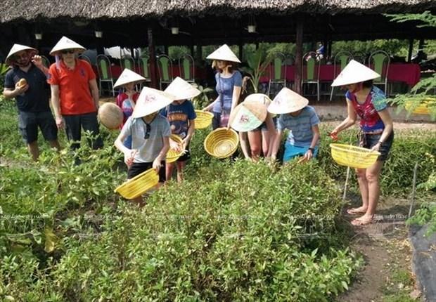 Ho Chi Minh-Ville lance sept programmes de tourisme ecologique et agricole hinh anh 1