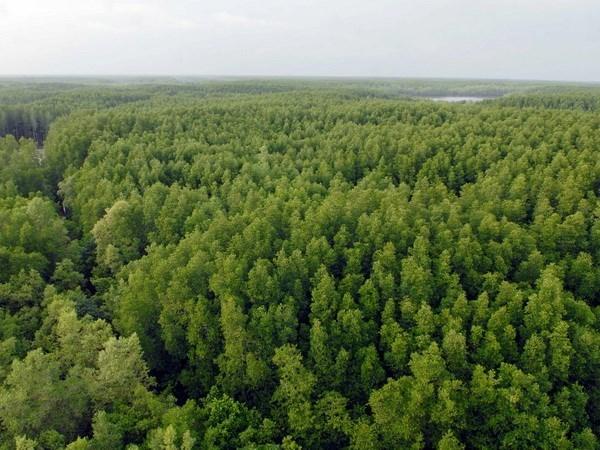 Proteger la mangrove de Can Gio, le mur vert de Ho Chi Minh-Ville hinh anh 2