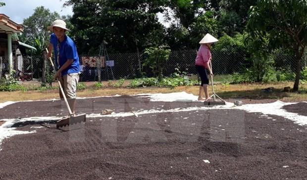 Dong Nai : les exportations du poivre maintiennent une bonne croissance hinh anh 1