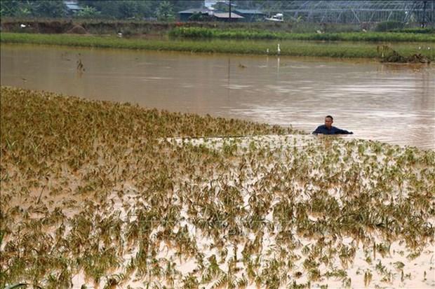 De fortes pluies causent de lourds degats a Lao Cai et Dak Nong hinh anh 1