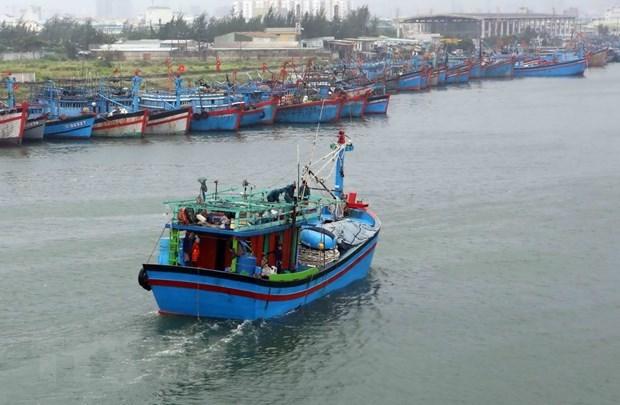 Mer et iles : Ca Mau et sa strategie de developper l'economie maritime hinh anh 3
