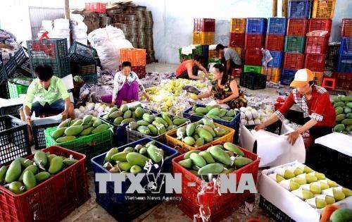 Le Vietnam augmente ses exportations de produits industriels et agricoles vers la Chine hinh anh 1