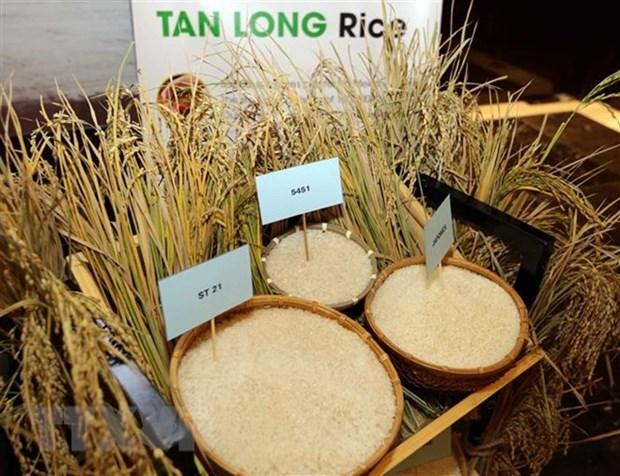 L'exportation de riz prevoit d'atteindre plus de 3,15 milliards de dollars en 2018 hinh anh 1