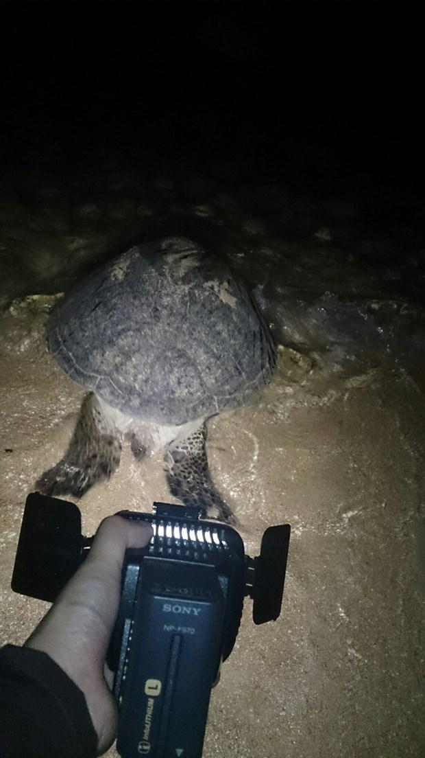 Sensibilisation de la communaute a conserver les tortues marines hinh anh 1