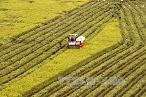 La visioconference pour faire le bilan du secteur agricole en 2018 hinh anh 1