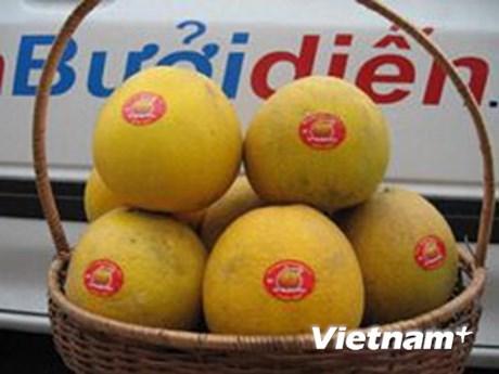 Le pamplemousse de Dien, une specialite fruitiere de Hanoi hinh anh 1