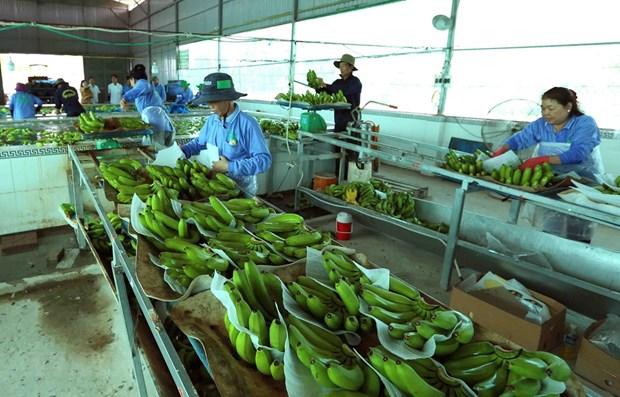 Vietnam et Pays-Bas coopereront dans l'application et le developpement des technologies post-recolte hinh anh 1