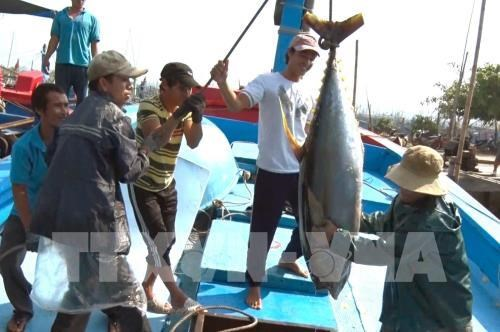 Binh Dinh est determinee a lutter contre l'exploitation illegale de produits aquatiques hinh anh 1