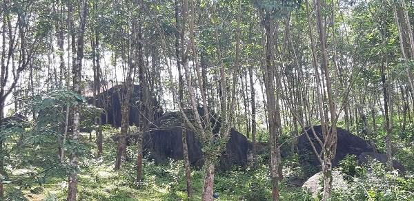 Aide allemande pour la conservation de la biodiversite forestiere a Thua Thien-Hue hinh anh 1