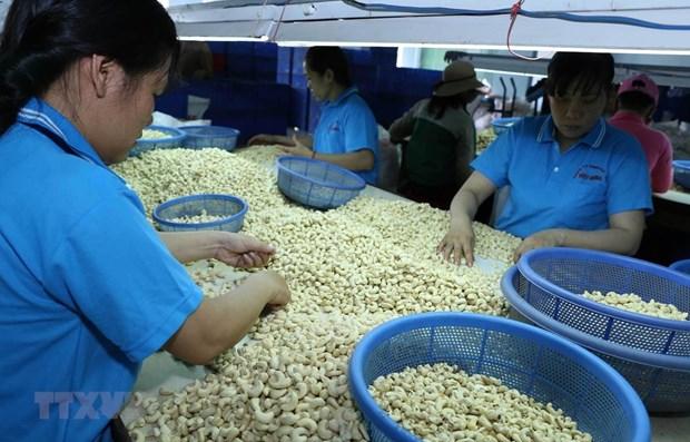 Aides neerlandaises pour developper la marque de noix de cajou de Binh Phuoc hinh anh 1