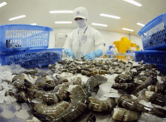 Signe positif des exportations de crevettes vers la Chine hinh anh 1