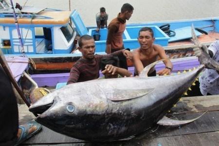 L'Indonesie prevoit de construire des marches internationaux des fruits de mer hinh anh 1