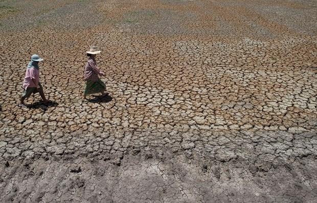 Thailande: la population est gravement touchee par la secheresse et la salinisation hinh anh 1
