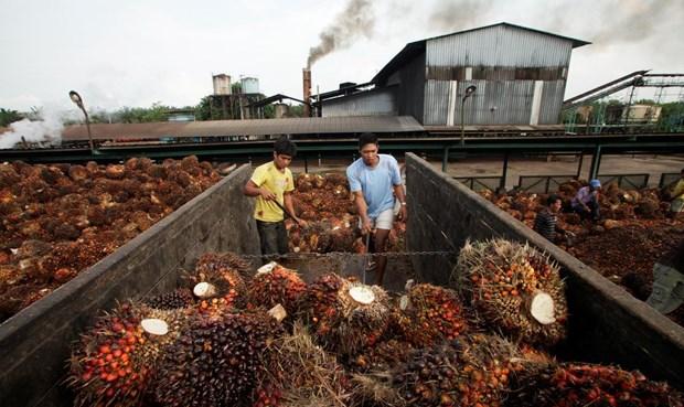 L'Indonesie exporte plus de 36 millions de tonnes d'huile de palme en 2019 hinh anh 1
