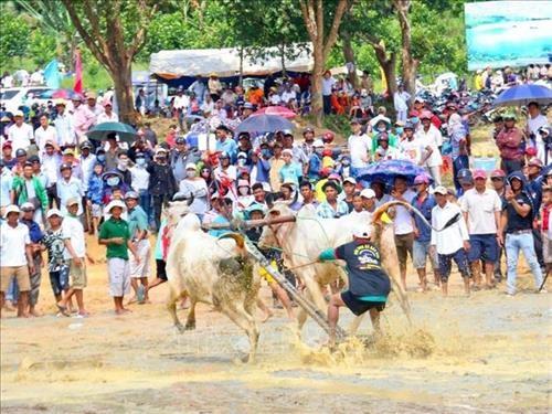 An Giang : valorisation du festival des courses de bœuf Bay Nui hinh anh 1