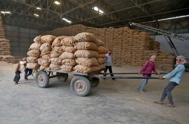 La Malaisie importe 100.000 tonnes de riz de l'Inde hinh anh 1