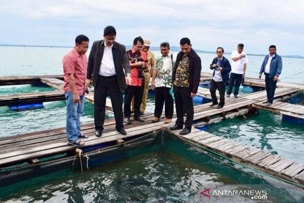 Indonesie: Tokyo et Seoul aident a repenser la conception des centres de peche hinh anh 1