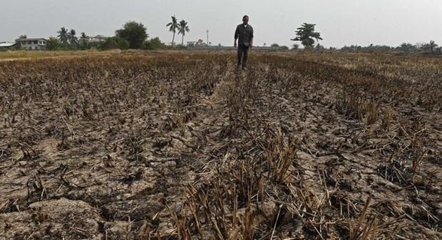 La Thailande face a une grave penurie d'eau hinh anh 1