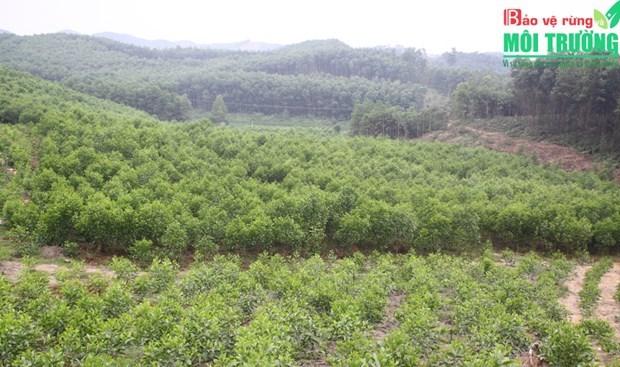Vinh Phuc developpe l'economie forestiere de maniere durable hinh anh 1